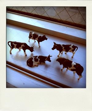 Trippa_cow_pd